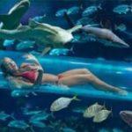 Zwembadglijbaan tussen de haaien bij dit bijzondere hotel in Las Vegas
