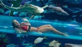 Zwembadglijbaan tussen de haaien door bij hotel in Las Vegas