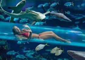 Zwembadglijbaan tussen de haaien...