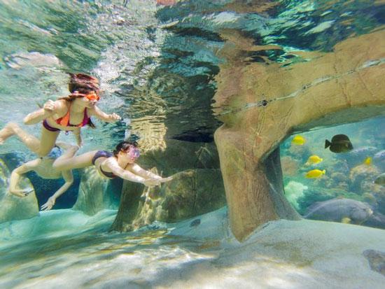Vakantiepark België met subtropisch zwembad